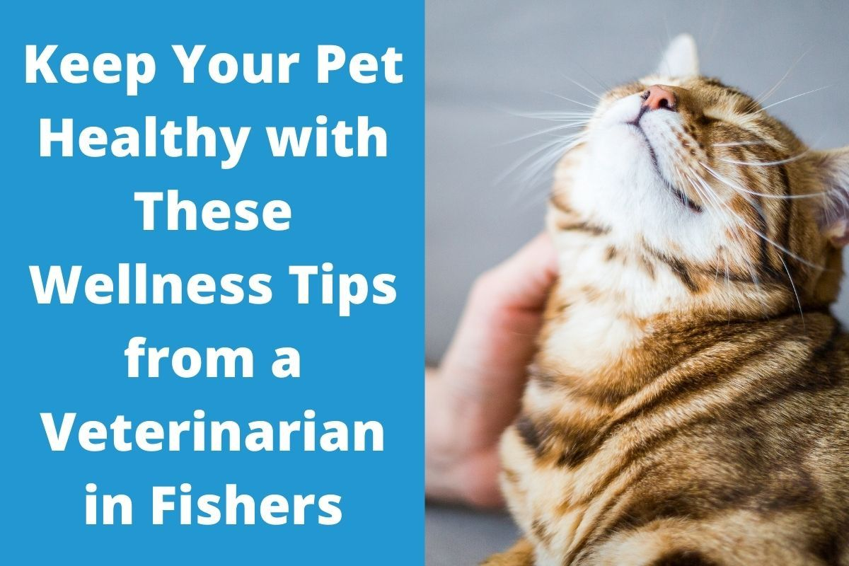 Keep-Your-Pet-Healthy-with-These-Wellness-Tips-from-a-Veterinarian-in-Fishers