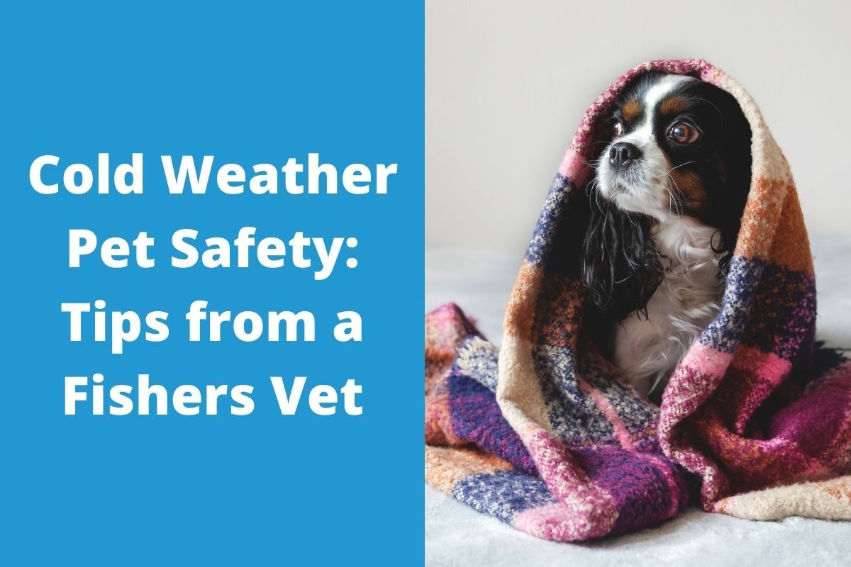 Cold-Weather-Pet-Safety_-Tips-from-a-Fishers-Vet
