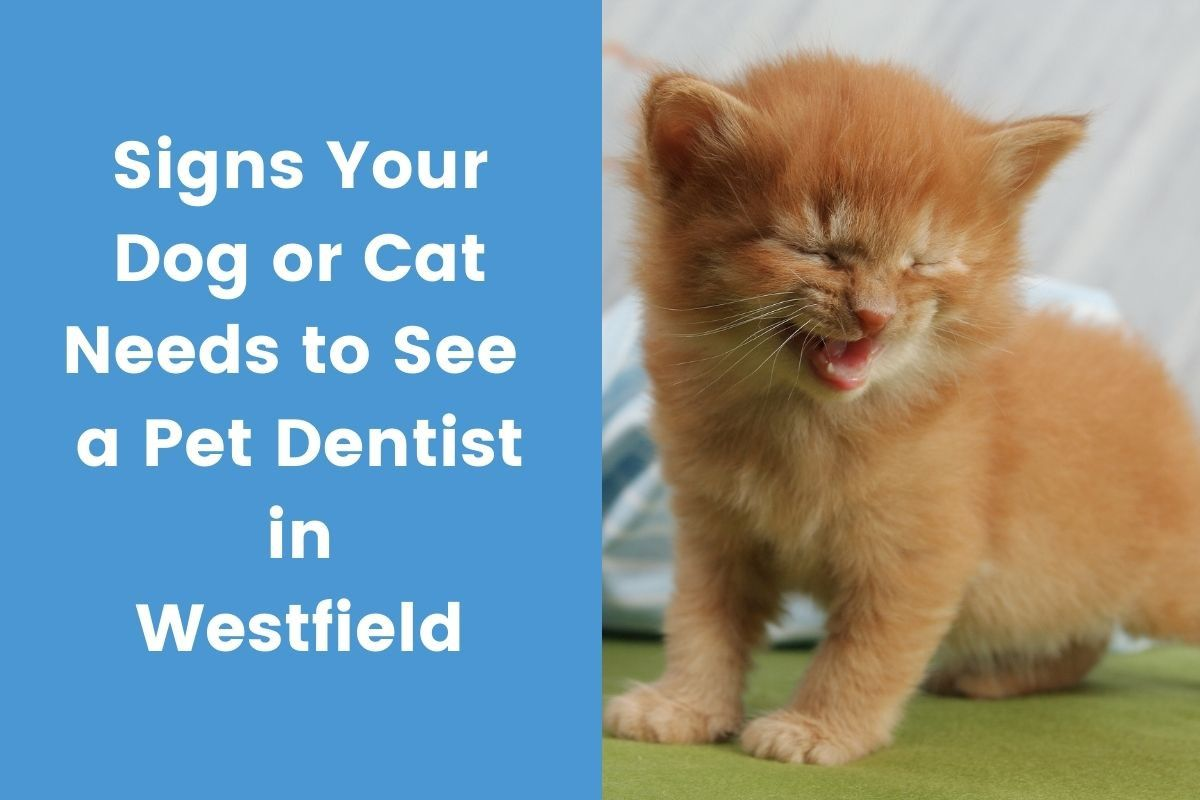 Signs-Your-Dog-or-Cat-Needs-to-See-a-Pet-Dentist-in-Westfiel_20210215-213656_1