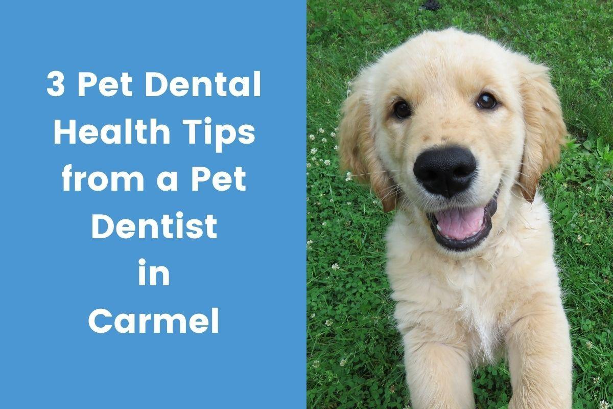3-Pet-Dental-Health-Tips-from-a-Pet-Dentist-in-Carmel