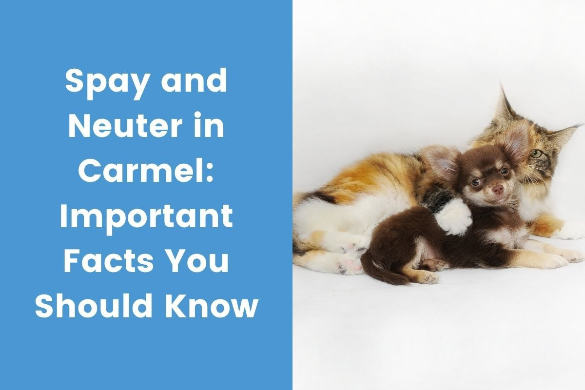 Spay-and-Neuter-in-Carmel_-Important-Facts-You-Should-Know