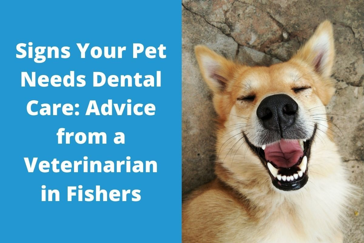 Signs-Your-Pet-Needs-Dental-Care_-Advice-from-a-Veterinarian-in-Fishers
