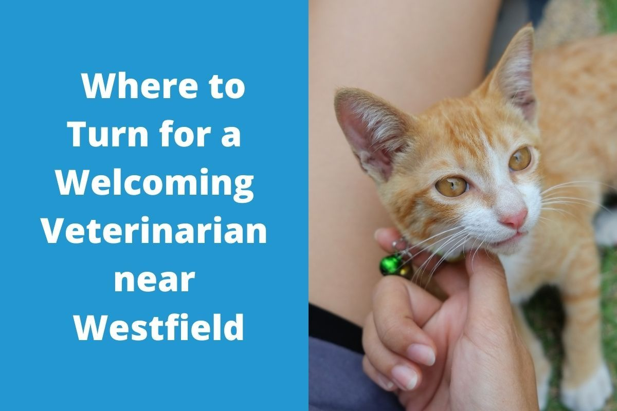Where-to-Turn-for-a-Welcoming-Veterinarian-near-Westfield
