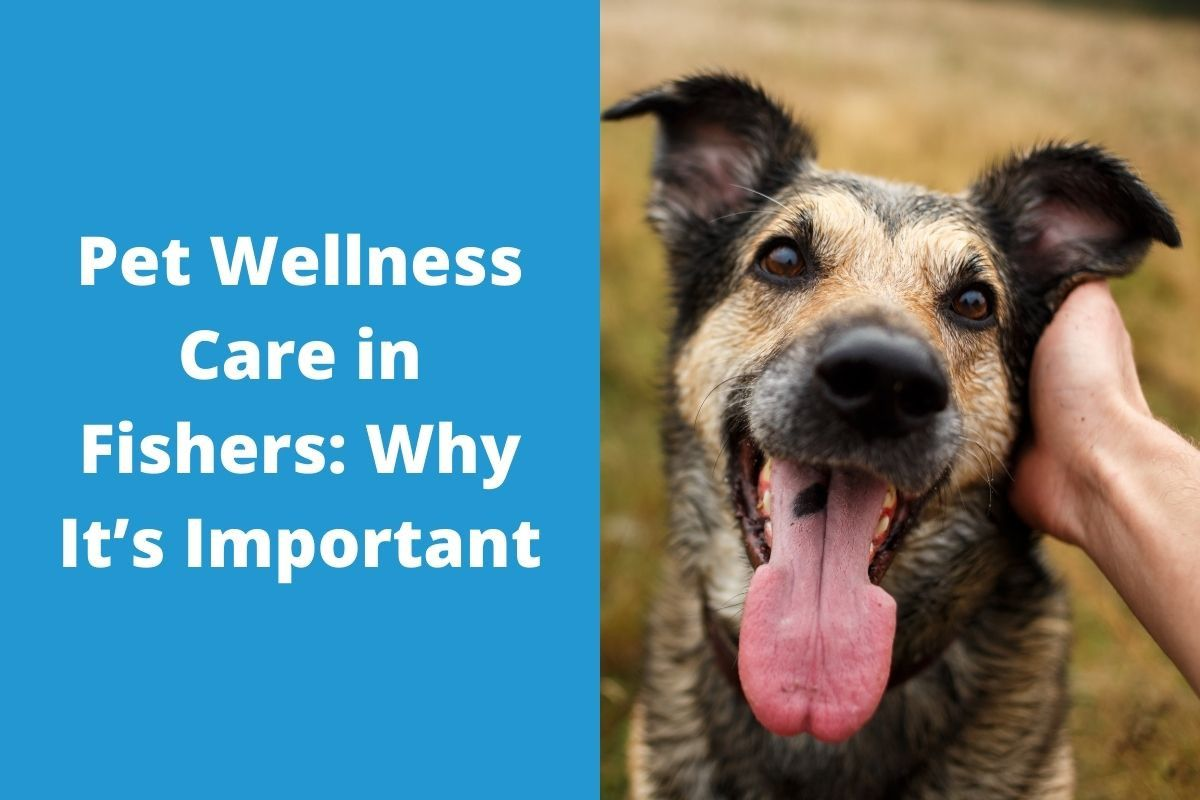 Pet-Wellness-Care-in-Fishers_-Why-Its-Important