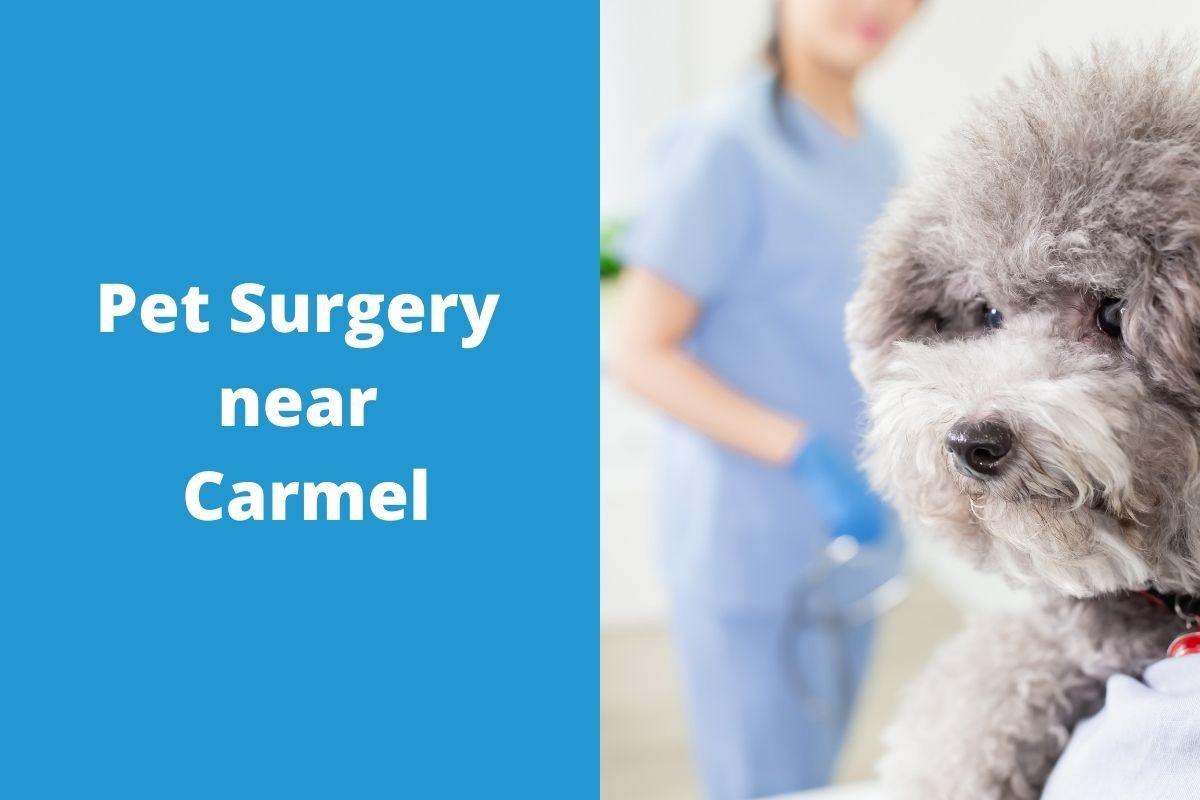 Pet-Surgery-near-Carmel