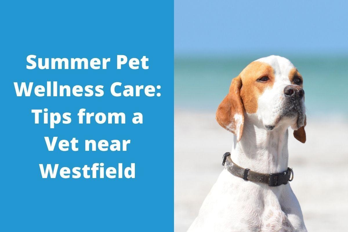 Summer-Pet-Wellness-Care-Tips-from-a-Vet-near-Westfield