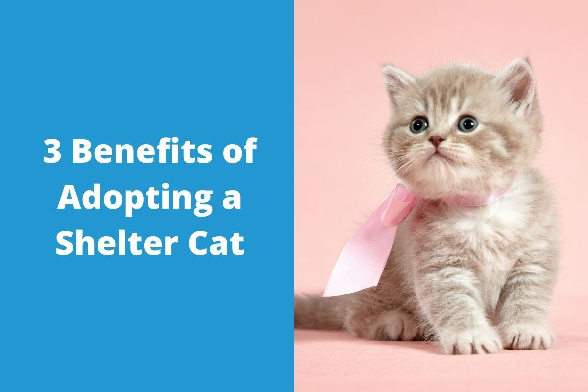 3-Benefits-of-Adopting-a-Shelter-Cat