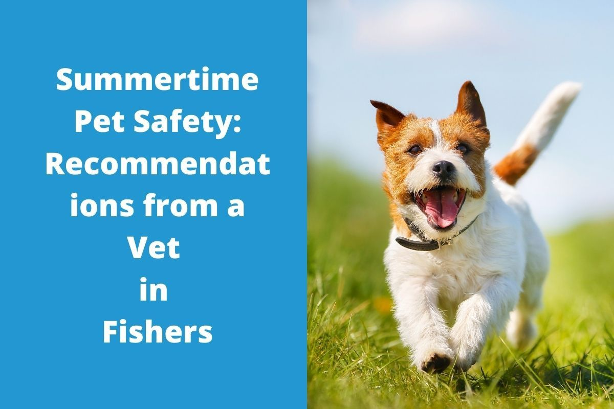 Summertime-Pet-Safety-Recommendations-from-a-Vet-in-Fishers