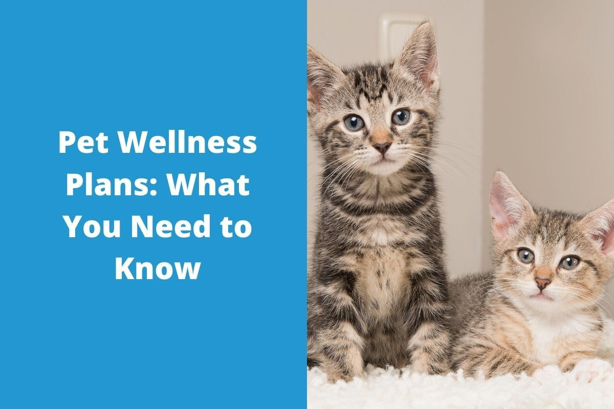 Pet-Wellness-Plans-What-You-Need-to-Know