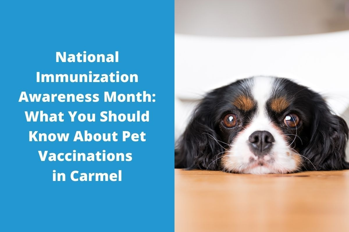 National-Immunization-Awareness-Month-What-You-Should-Know-About-Pet-Vaccinations-in-Carmel
