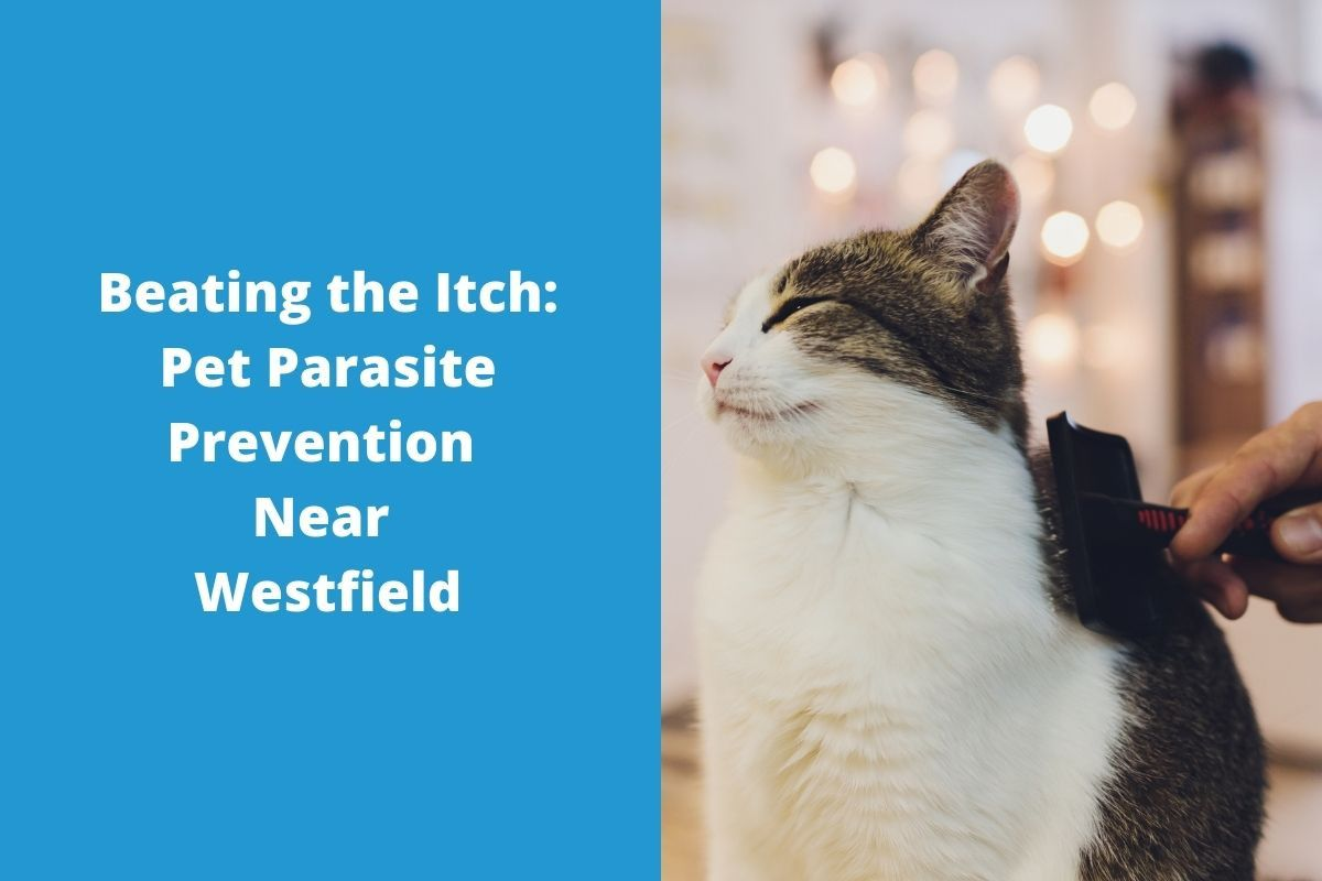 Beating-the-Itch-Pet-Parasite-Prevention-Near-Westfield